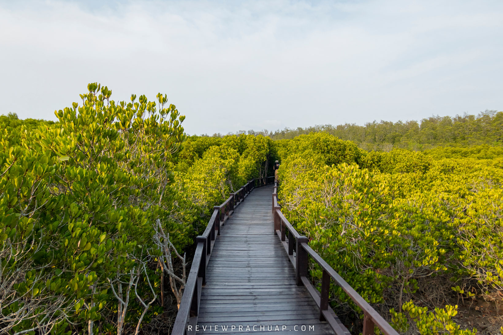 พิกัดปักหมุด วนอุทยานปราณบุรี ให้ธรรมชาติบำบัดคุณกับต้นไม้สุดสายตาลมเย็นๆและต้นไม้หลากหลายพันธุ์